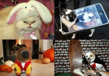 Te zwierzęta nie lubią Halloween...