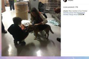 Alicja Bachleda-Curuś przygarnęła psa