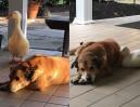 Kaczka wyleczyła psa z depresji!