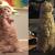 Nowa gwiazda Internetu: George - kot stojący na dwóch łapach! (ZDJĘCIA)
