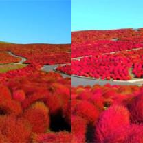 Tak wygląda jesień w Japonii!