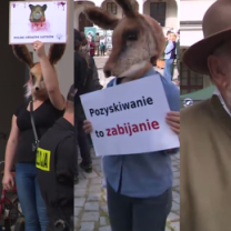 """Obrońcy praw zwierząt protestowali w Szczecinie. """"Krew to nie farba!"""""""