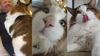 """Nowa gwiazda Instagrama: Samson, """"największy kot w Nowym Jorku"""" (ZDJĘCIA)"""