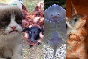 Najsławniejsze zwierzęta 2014 roku!