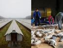 Słynny fotograf pokazał polskie hodowle norek! (UWAGA: DRASTYCZNE ZDJĘCIA)