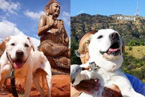 Mężczyzna zabrał śmiertelnie chorego psa w podróż po Stanach Zjednoczonych!