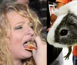 Magda Gessler pokazała żywą świnkę morską, którą potem... zjadła?
