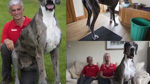 Czy to największy pies świata? Ma... ponad 2 metry (ZDJĘCIA)