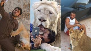 Nowa moda na Instagramie: bogacze chwalą się dzikimi kotami (ZDJĘCIA)