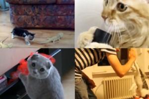 Najlepsze filmy z kotami 2013!