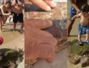 Turyści wyłowili z morza żółwia, bo chcieli... robić sobie z nim zdjęcia!