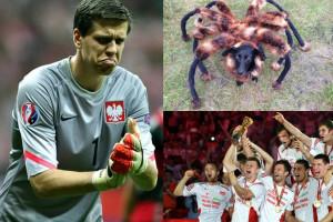 WYDARZENIE ROKU 2014: Siatkarze, piłkarze, Eurowizja czy... pies-pająk?