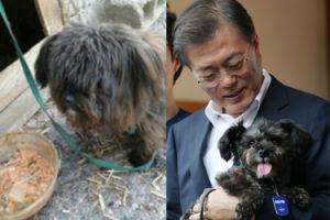 """Porzucony pies został """"oficjalnym"""" pupilem prezydenta Korei Południowej! """"Zwierzęta mają prawo być wolnymi od uprzedzeń i dyskryminacji"""""""