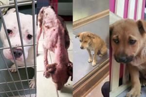 Zwierzęta ze schroniska: PRZED i PO adopcji... (ZDJĘCIA)