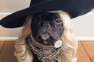 Trotter - najmodniejszy pies na Instagramie!