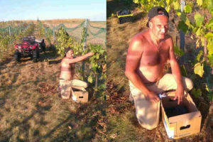Paweł Kukiz zabrał się za zbieranie winogron
