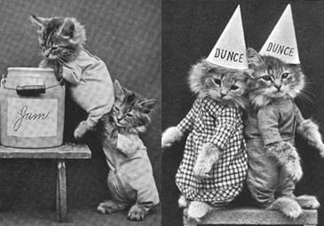 Śmieszne zdjęcia kotów sprzed... 140 LAT!