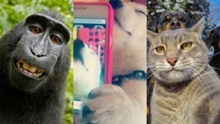 Najlepsze selfie zwierząt... (ZDJĘCIA)