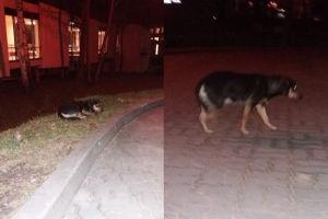 """Wolontariuszka: """"W szpitalu umarł człowiek, przy wejściu czeka pies..."""""""