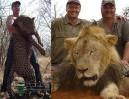 Dentysta z USA zabił najsłynniejszego lwa w Zimbabwe! Zapłacił 55 tysięcy dolarów...