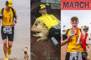 Bezdomna suczka biegła za maratończykiem... ponad 170 kilometrów przez pustynię (ZDJĘCIA)