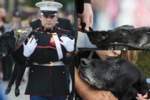 Amerykańska marynarka pożegnała z WOJSKOWYMI HONORAMI chorego labradora... (ZDJĘCIA)