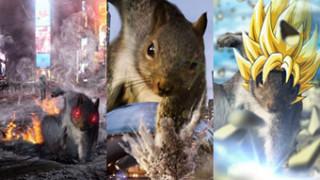 Wiewiórka-superbohaterka została gwiazdą Internetu (ZDJĘCIA)
